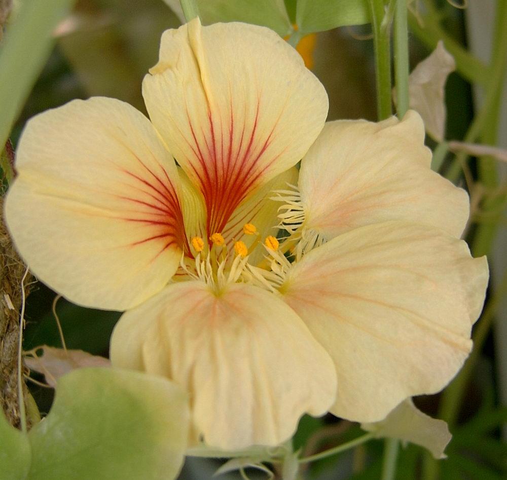 http://lllcat.narod.ru/Flower/2006B/Nastr6.JPG